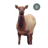 Fred Eichler Elk Decoy