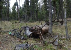 HECS Elk Hunting
