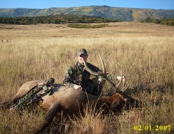 Decoyed Bull Elk