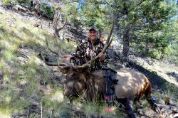 Bull Killed in ASAT Leafy 3D