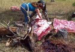 Quartering Elk on the Ground