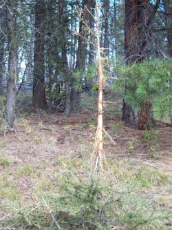 Elk Rub