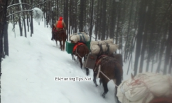 Pack String Hauling Camp