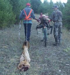 Packing elk meat on a bicycle