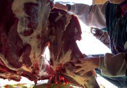 Quarterting Elk Front Leg