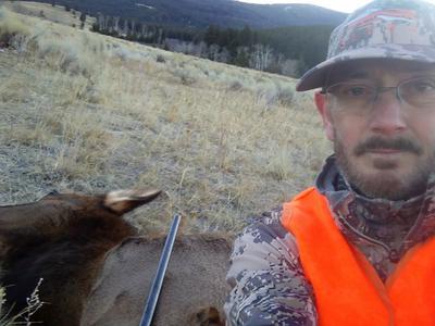 Second elk