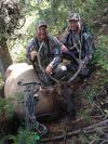 1st Archery Bull